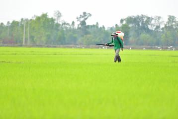 Thailand farmer spraying pesticide on rice.