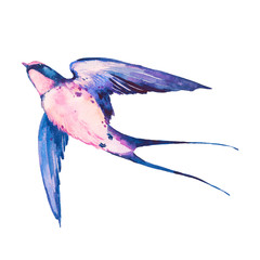 Watercolor swallow bird. Flying bright bird isolated on white background. Hand painted illustration.