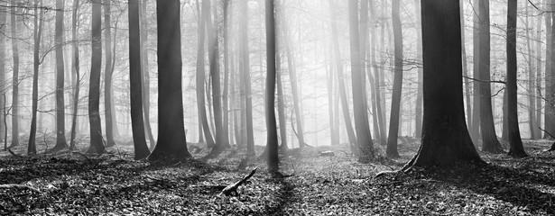 Kahler Buchenwald im Winter, Sonnenstrahlen dringen durch Nebel, Panorama, Schwarz-Weiß
