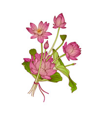 vector illustration of lotus flower bouquet
