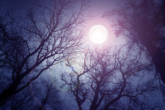 Dark enchanted photo of a full moon in the trees branches background. Blue and violet fairy-tale colors