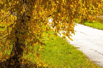 Texture of autumn maple leaves