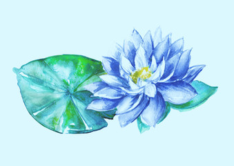 blue water-lily flower, Nuphar lutea, isolated, watercolor illustration, watercolor flower Picture.Vintage set
