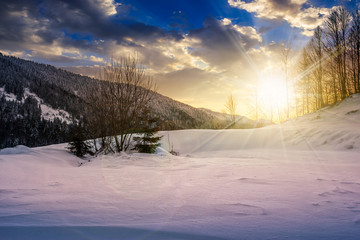 trees on snowy meadow in mountains at sunset