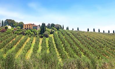 Oliviers en Chianti, Toscane