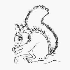 .vector illustration of the squirrel on white background