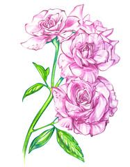 Bouquet of roses, watercolor, can be used as greeting card, invitation for wedding, birthday and other holiday summer background.