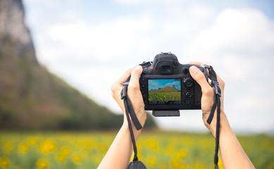 Female hands holding camera, take a photo sunflower fields, background sunflower fields