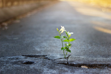 white flower growing on crack street, soft focus, blank text Wall mural