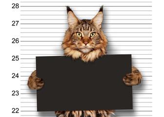 Katze Mugshot