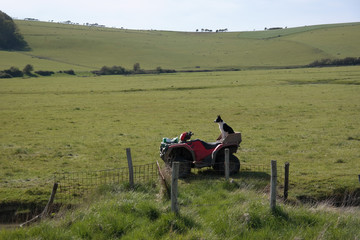 Dog on farm equipment waiting for owner