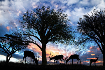 animales comiendo en el campo