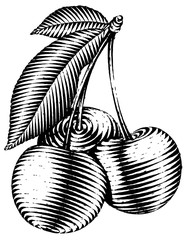 Engraved isolated illustration of a cherry