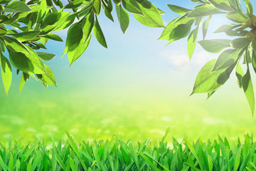 Fresh nature in spring. Green growing leaves
