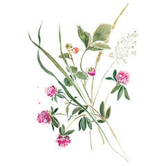 Delicate bouquet of herbs with greens, flowers of clover and wild strawberry. Original isolated on white watercolor painting.