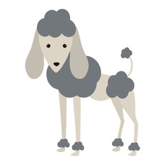 cartoon cute poodle dog icon over white background. coloful design. vector illustration