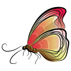 graphic design editable for your design, hand drawn color butterfly isolated on white background. Vector Illustration.