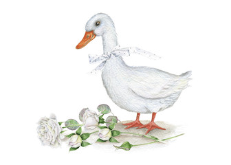 Watercolor. Goose. Roses. Vintage