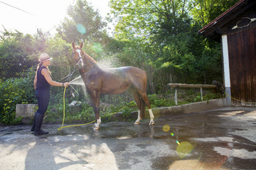 Woman washing horse using garden hose