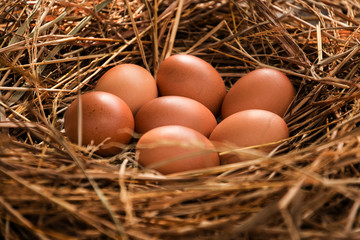 close up of eggs in chicken nest. shallow depth of field selective focus on egg.