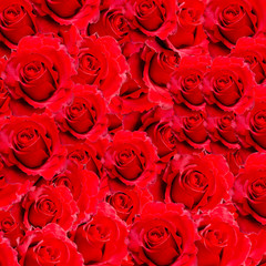 Red rose background and texture