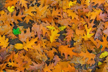 Hojas del Parque Tiergarten Berlín en otoño
