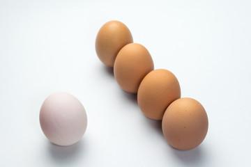 Egg line on white background