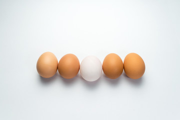 Egg line on white background