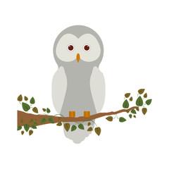 Owl cartoon icon. Bird animal and nature theme. Isolated design. Vector illustration