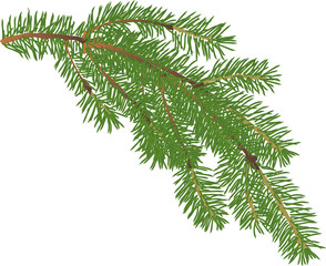 green fir small branch isolated illustration