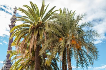 Barcelona, Spain - November 10, 2016: Palm trees with blue sky and the Top of the Columbus Monument (Mirador de Colom)