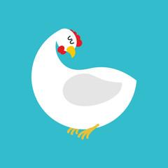 White hen isolated. Farm chicken bird on blue background