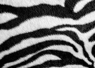 Photo sur Toile Zebra Zebra skin pattern leatherette fabric