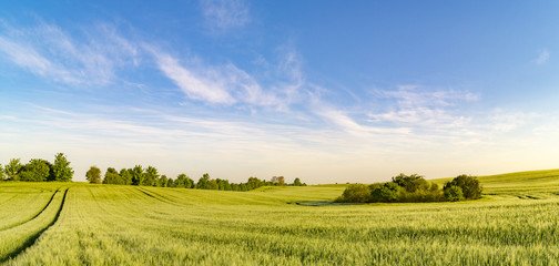 panorama spring green field