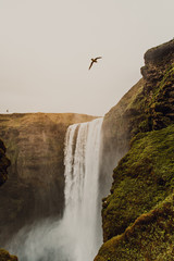 Bird flying above waterfall