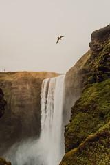 Bird flying above waterfall