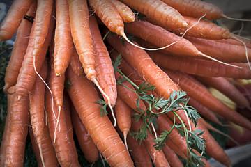 Carrots In a Bundle In a Market in Berlin