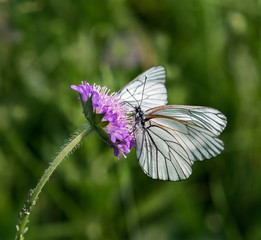 Butterfly on a flower carnations