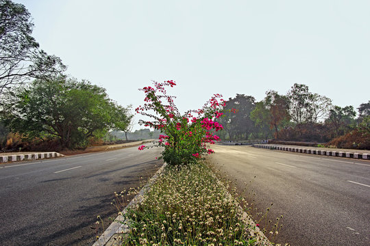 Highway lanes and median with ornamental plant growth and flower beds shining in morning sun