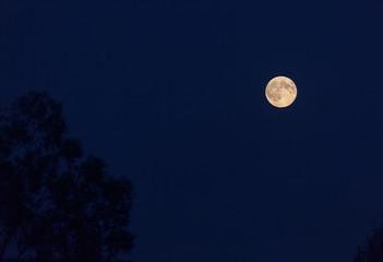 Full moon rises in the night sky