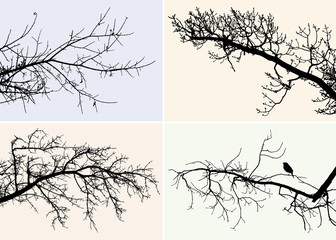 the silhouettes of the different trees branches