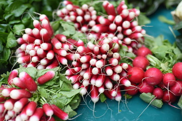 Bunches of radish