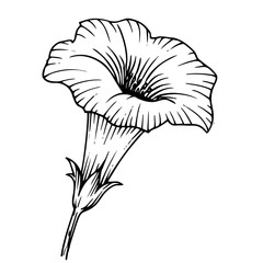 эскиз цветок колокольчик