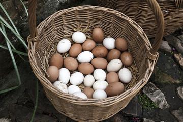 Eggs in a basket Fresh eggs in a basket