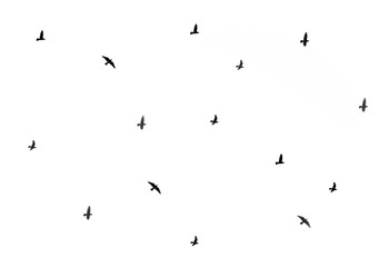 bird silhouettes on a white background