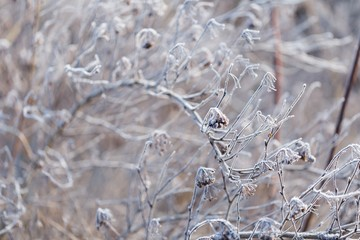 Abstract macro of white hoarfrost on plants
