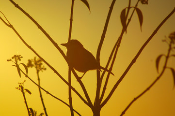 a Bird on a branch at dawn