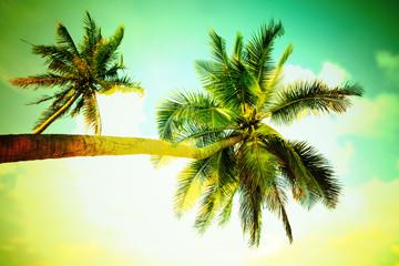 Vintage Palm Trees.