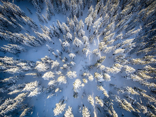 Snowy Tree Tops from Above | Crater Lake National Park, Oregon