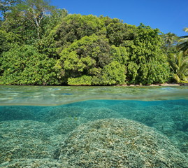 Half and half over and under the water surface, lush foliage on tropical shore and Porites rus corals underwater split by waterline, Pacific ocean, French Polynesia, Huahine island